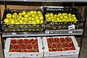 Apples and Strawberries prepared for sale to individuals. Lufa Farms. Montreal. Province of Quebec. Canada