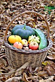 Basket of various autumn vegetables: pumpkin, zucchini, apples, walnuts, chestnuts