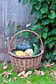 Basket of various autumn vegetables: pumpkin, zucchini, apples