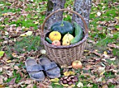 Basket of various autumn vegetables: pumpkin, zucchini, apples, walnuts, chestnuts, pair of shoes