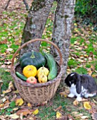 Basket of various autumn vegetables: pumpkin, zucchini, apples, walnuts, chestnuts, pairs of shoes and dwarf rabbit