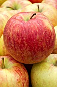 Malus domestica Braeburn (Apple)