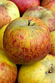 Malus domestica Drap dOr (Apple)