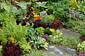 VEGETABLES,  HERBS AND FLOWERS IN BORDER