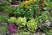 LETTUCES,  HERBS AND FLOWERS IN BORDER
