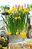 EASTER BREAKFAST - NARCISSUS TETE-A-TETE