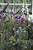 ALLIUMS IN ASSCOCIATION WITH DIGITALIS AND AQUILEGIAS