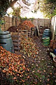 COMPOST BINS FULL OF RAKED LEAVES