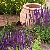 TERRACOTTA CONTAINER WITH ANTHEMIS AND SALVIA