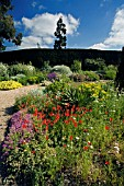THE  DROUGHT RESISTANT GRAVEL GARDEN AT BETH CHATTO GARDENS,  WITH RED TULIPA SPRENGERI IN THE FOREGROUND